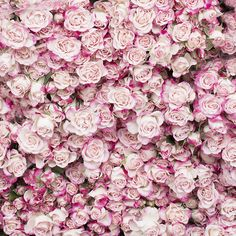 Roses from the Marché President Wilson in Paris, by Georgianna Lane