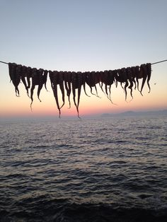 #nisyros #greece #octopus #sky #sunset #evening #view #amazing #taverns Octopus, Greece, Sky, Sunset, Amazing, Nature, Travel, Voyage, Heaven