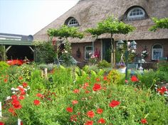 Het Farm-House Natuurpark!, Bed and Breakfast in Twijzelerheide, Friesland, Nederland   Bed and breakfast zoek en boek je snel en gemakkelijk via de ANWB