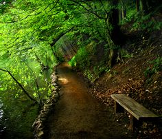 Beautiful path and bench in woods