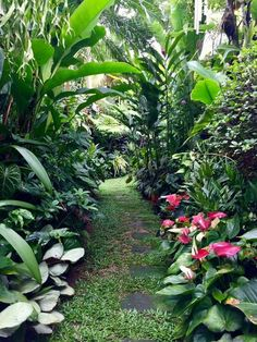 Tropical garden Ideas, tips and photos. Inspiration for your tropical landscaping. Tropical landscape plants, garden ideas and plans. Tropical Garden Design, Tropical Landscaping, Garden Landscape Design, Landscaping With Rocks, Landscaping Tips, Landscape Designs, Front Yard Landscaping, Tropical Gardens, Tropical Plants