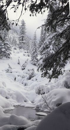 Winter Landscape - Winter Wonderland in Bulgaria.
