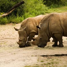South Africa Safari Tours | EXPERIENCE SOUTH AFRICA WITH SAFARI ADVENTURE (5)