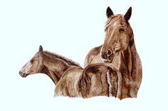 horse pyrografie