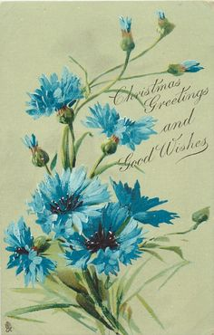 CHRISTMAS GREETINGS AND GOOD WISHES blue cornflowers (Klein)