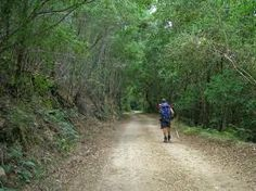 outeniqua trail - Google Search Trail, Hiking, Country Roads, Adventure, Google Search, Ideas, Walks, Adventure Movies, Trekking