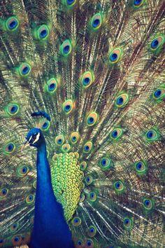 Royally Blue I Photographic Print