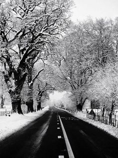 Snow, winter, trees, road to nowhere
