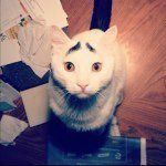 samhaseyebrows on Instagram  the only cat I know that always looks surprised : )