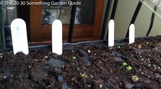 The blue Sharpie ran due to humidity so the tags are worthless. However, saving the seed packets will help me identify the seedlings once they're larger. | The 20-30 Something Garden Guide.