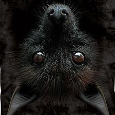 Egyptian fruit-bat, or just flying fox (dog).