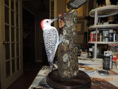 Red Belly Woodpecker - Woodworking creation by Rolando Pupo