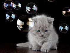 Katzenbabys am Ball: Süße kleine Sportskanonen - Seite 9