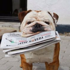 Would love it if Daisy or Lily could do this without drooling all over the paper!