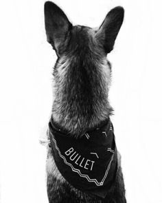 Ivanna's dog-- Bullet. He and Mr.Whiskers are great pals. (New Story)