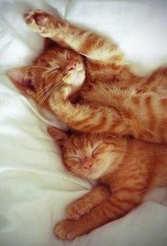 Sweet Ginger #cat