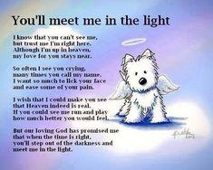 Westie Angel At Rainbow Bridge Canvas Print / Canvas Art by Kim Niles Fu Dog, Dog Cat, I Love Dogs, Puppy Love, Pet Loss Grief, Image Citation, Tier Fotos, Pet Memorials, Westies