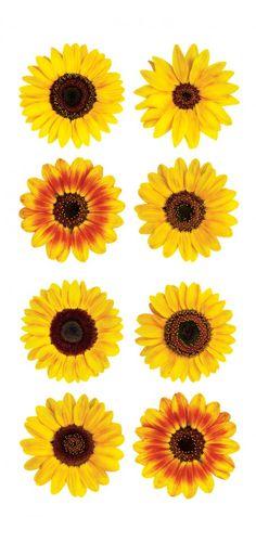"Mini Sunflowers 2"" Sticker"