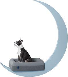Dog Bed (Small, Medium or Large)   Casper   Casper®