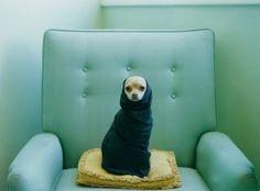 vintage pup!