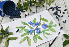 Picture of Paper sheet with drawing of honeyberry branch, cup of fresh berries, bush and leaves on planks. Beautiful summer vintage still life, vegetarian and vegan concept stock photo, images and stock photography. Image 104546549.
