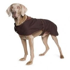 Ancol Muddy Paws Timberwolf Extreme Wax Dog Jacket (Large) via Emmys Pet Supplies. Click on the image to see more!