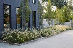If the color pallet of your home's exterior is in the darker range, create drama with the contrasting foliage of 'Hameln' Dwarf Fountain Grass (Pennisetum alopecuroides 'Hameln'). (zones 4 to Farmhouse Landscaping, Modern Landscaping, Front Yard Landscaping, Backyard Landscaping, Landscaping Ideas, Farmhouse Garden, Landscaping Software, Landscaping With Grasses, Arizona Landscaping