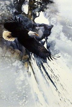 "The Mighty Eagle soaring through the Sky Signed and Numbered Image Size 16.5"" x 24.75"""