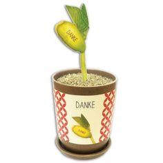 """Sagen Sie's durch die Bohne! Ecobeans sind Bohnenpflänzchen im kompostierbaren Topf aus Bambusfasern, die, nachdem sie gekeimt haben, auf ihrem ersten Blatt eine Botschaft transportieren! """"Alles Gute"""", """"Viel Glück"""", """"Happy Birthday"""" oder """"Danke"""" - eine frische, knackige Idee, um zu gratulieren oder Glück zu wünschen. Tolle, kleine Aufmerksamkeit!"""
