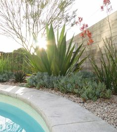 succulents and giant agave with rocks around the pool