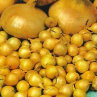 Groente : ajuin of uien planten. Plantajuin en plantui zijn vrij makkelijk te telen