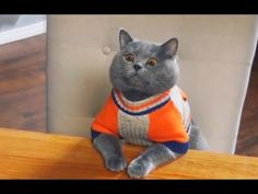 Pinned onto Animals Board in Animals and Pets Category Cute Cats, Funny Cats, Funny Animals, Cute Animals, Comedy Movies For Kids, Cats Best, 2016 Funny, Curious Facts, Cartoon Tv Shows