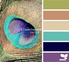 Peacock Color Palette : For Our Bedroom, I love the Teal and Purple! Peacock Color Scheme, Peacock Colors, Colour Schemes, Color Combinations, Peacock Theme, Colour Palettes, Colorful Feathers, Peacock Feathers, Color Palate