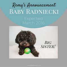 The pregnancy announcement of blogger Laura Radniecki, sharing the expected arrival of their first baby in March 2016. Their first [fur] baby Remy, a 5 pound toy poodle, made the announcement in a clever video, sharing the news with family and friends!