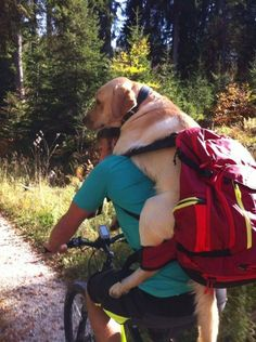 You and your dog Mtb Trails, Mountain Bike Trails, Biking With Dog, Touring Bike, Weekend Fun, Bike Life, Four Legged, Pet Dogs, Your Dog