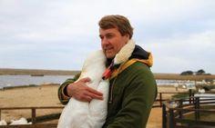 A swan gives the sweetest hug to her savior