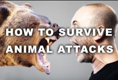 How to survive animal attacks