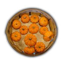 Name: Basket-Pumpkins_bg.png Views: 1127 Size: 58.3 KB