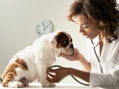 Take your pet to the vet annually.