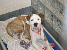 """""""JASMINE"""">>>>PITTSBURGH, PA..PetHarbor.com: Animal Shelter adopt a pet; dogs, cats, puppies, kittens! Humane Society, SPCA. Lost & Found."""