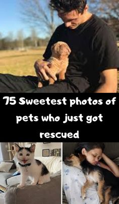 75 Sweetest photos of pets who just got rescued Baby Animals, Cute Animals, Intresting Facts, Funny Dog Memes, Fun World, Seriously Funny, Classic Collection, Funny Pins, Just Amazing
