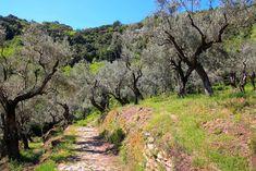Nous quittons aujourd'hui la région de Delphes pour la péninsule du Pélion, une destination qui devrait plaire aux amateurs de randonnée. Au programme, deux jours de balades entre terre et mer, dans les kalderimia (sentiers empierrés) de la région.  Le village de Markinista, au coeur du Pélion  Nous arrivons à Volos en fin […]