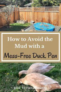 Backyard Ducks, Backyard Farming, Chickens Backyard, Backyard Fences, Backyard Poultry, Backyard Landscaping, Raising Ducks, Raising Chickens, Duck Waterer