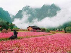 Diễn Biến Lễ Hội Hoa Tam Giác Mạch Hà Giang Năm 2016 - Tạp chí du lịch Việt Nam - du lịch, cảnh đẹp thiên nhiên và cuộc sống.