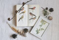 birds, nature, book, flower, feathers, spring