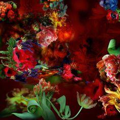 Elusive Treasures - Isabelle Menin - Bilder, Fotografie, Foto Kunst online bei LUMAS