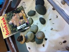 By adding rocks in the sand table it allows children to connect the two objects. By adding the book it gives examples and inspires imagination. Sensory Table, Sensory Bins, Sensory Activities, Sensory Play, Activities For Kids, Kindergarten Sensory, Block Area, Sand Table, Sand Play