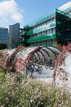 Un luxuriant tapis végétal sur la rue Garden à Bâle en Suisse