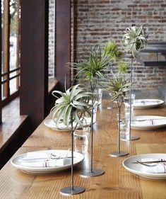 supports pour plantes sans terre - une idée créative et originale de déco de table