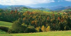 En pleno corazón de Navarra se un encuentra un valle pirenaico, por tradición y cultura, de enorme belleza natural. Este lugar de paso del Camino de Santiago es, tras la impresionante Selva de Irati, la mayor y mejor conservada mancha forestal de Navarra e incluso de la península entera. Pasear por esta tierra es perderse en una amalgama de hayedos, barrancos, crestas escarpadas y riachuelos que salen a nuestro encuentro con cada paso. Este valle, cuna del euskera, nos permite disfrutar de…